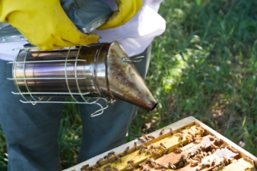 Bee_keeper-5