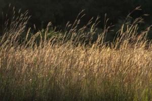 _grasses-1-2