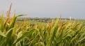 Corn field, Village of Kennard in background