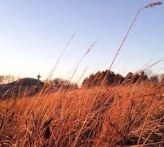 neihardt_grasses-11.jpg