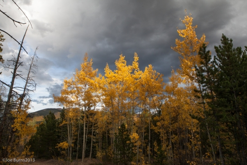 Yellow Aspen trees and mountain landscape