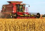 combine harvesting beans