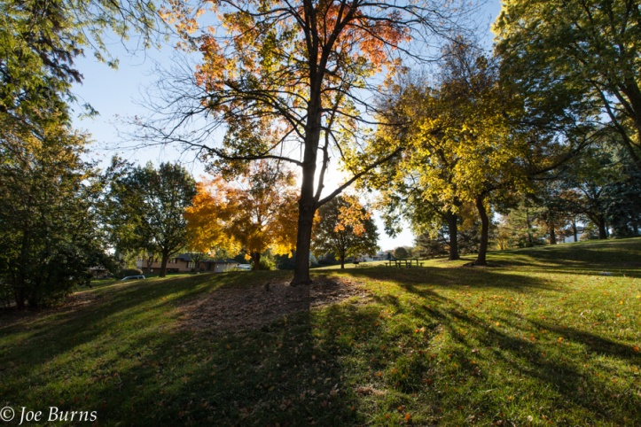 Back lit trees in park