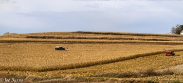 combine and auger wagon in cornfields