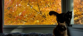 cats on sofa and picture window with tree covered with orange red leaves