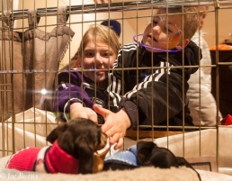 Kids pet puppies