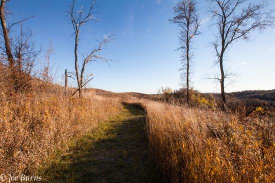 Trail though grassland