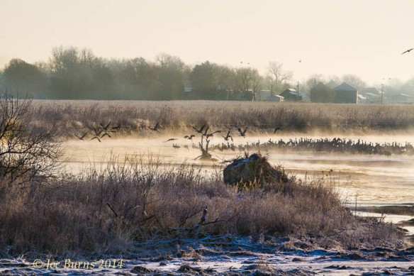 Cranes on sandbar in the Platter River.