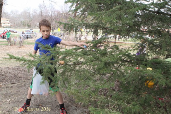 Third grader looks for eggs hidden in a tree.