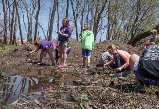 Planting along edges of wetland