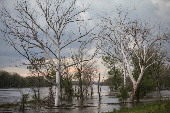 Dead and dying gtrees due to flooding along the river.