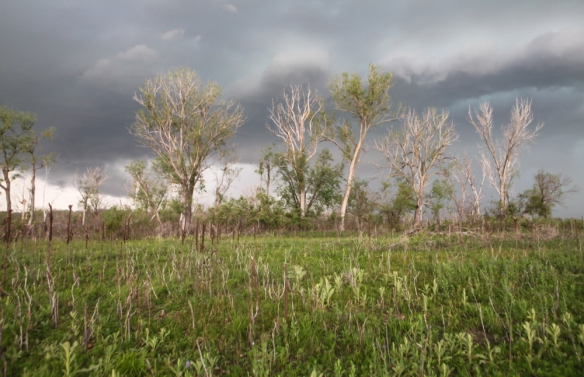 Storm clouds and  trees at DeSoto NWR