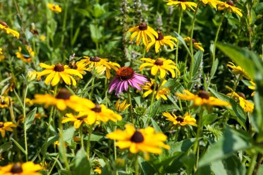 Arbor Park flower meadow.