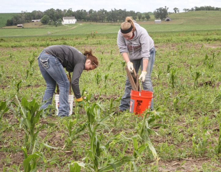 Students pick up debris from a cornfield east of Pilger.