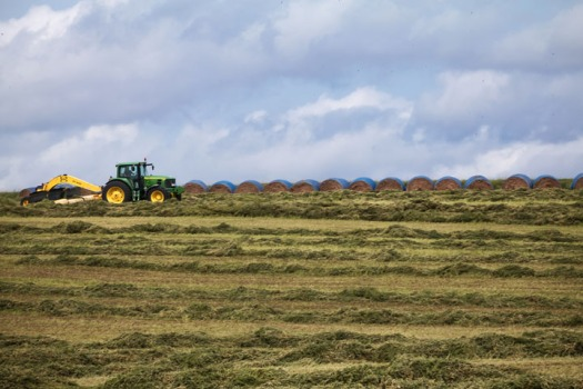 Scott Wegner rakes cut alfalfa into windrows.