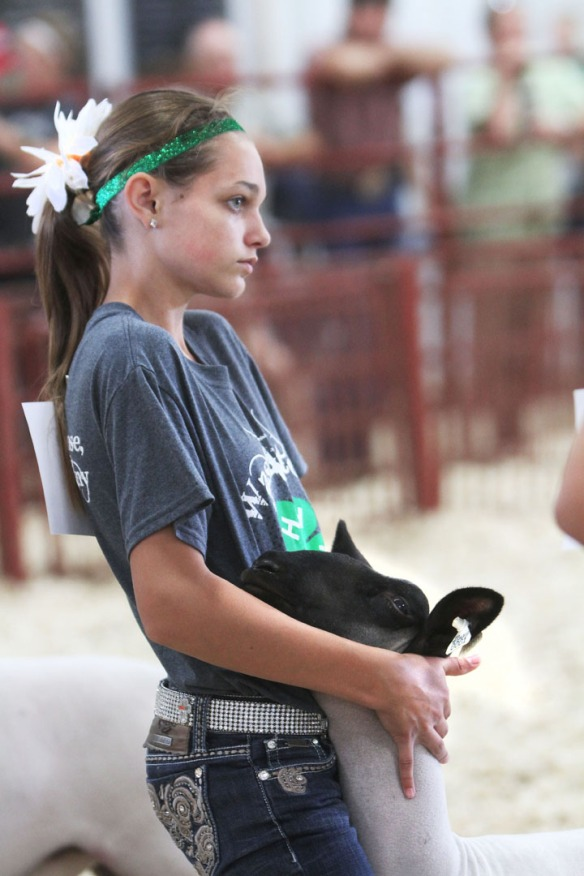 Allison Nielsen, holds her lamb during intermediate showmanship competition.