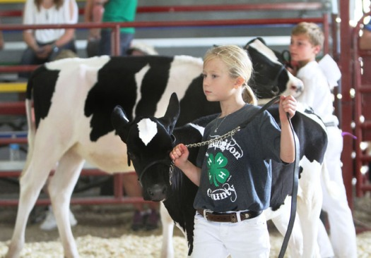 Brooke Hilgenkamp,  Dairy show.