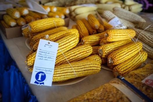1st place corn entry.