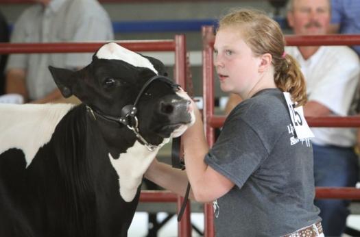 Jada Wheeler, Dairy show.