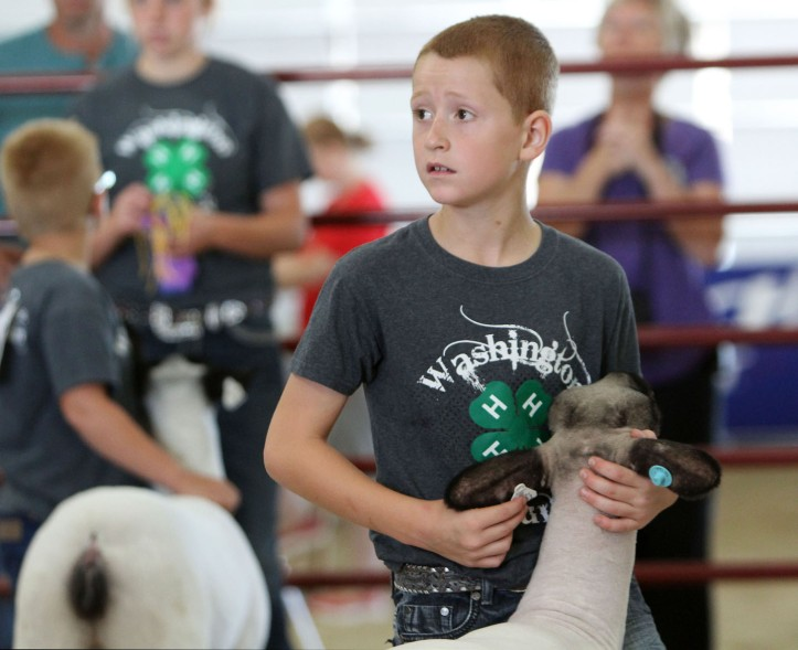 Nate Wachter shows sheep in junior sshoman competiton.