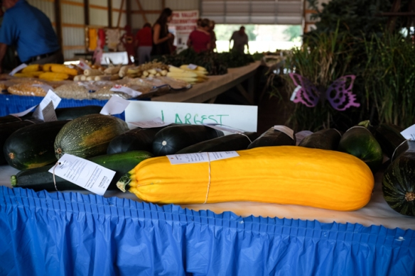 Display of large vegetables.