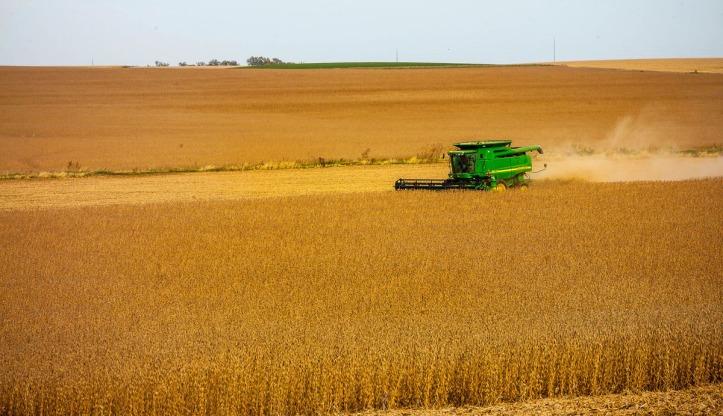 Randy Fuchs harvesting soybeans near Arlingnton.