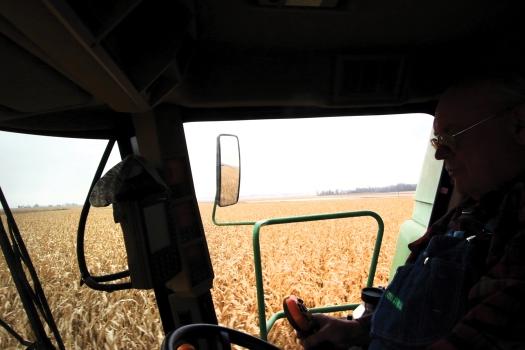 Jeff Quist pilots his combine through cornfield.