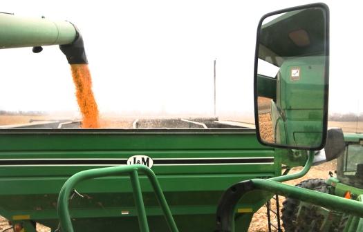 Unloading corn from combine into grain cart.