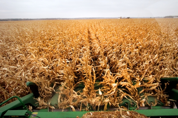 View from the cab of Quist's combine