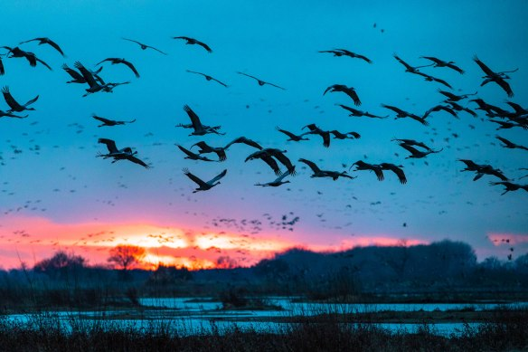 Evening on the Platte as Cranes fly in to roost.