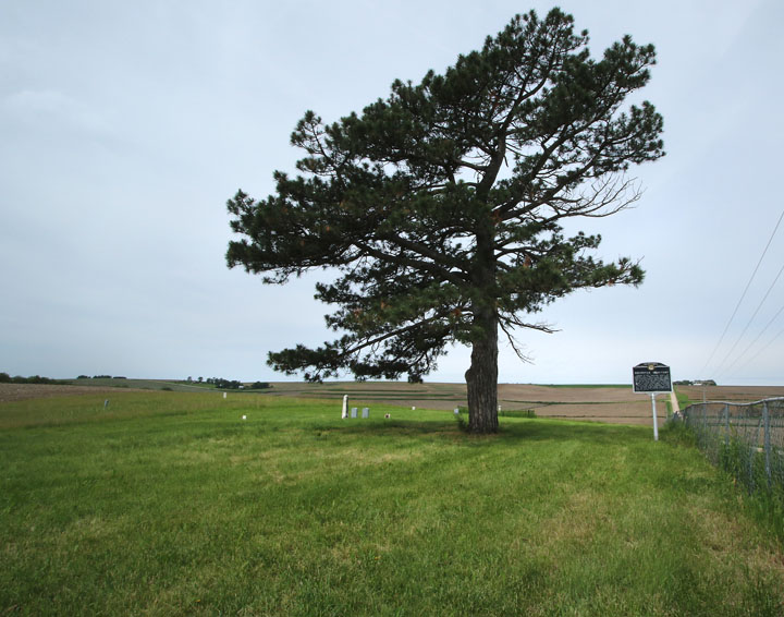 A lone, weathered pin tree is a distinctive feature at Brewster Cemetery  along County Road 26 North of Kennard.