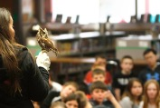 SOAR educator Kay Neumann holds Cedar , an Eastern Screech Owl while she talks with Arbor Park Students. Save Our Avian Resources educator Kay Neumann visited Arbor Park School today with a Bald Eagle named Thora and Cedar, an Eastern Screech Owl. While the goal of SOAR is return all birds to the wild, Thora suffers from limited vision due to lead poisoning. Cedar is non releasable due to a damaged wing.