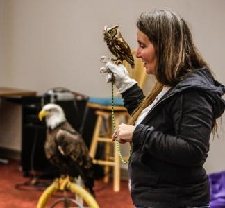 Bald eagle Thora stands on perch while Kay Neumann holds screech owl Cedar