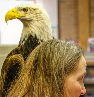 Save Our Avian Resources educator Kay Neumann holds bald eagle Thora. The eagle is non-releasable due to limited vision caused by lead poisoning.