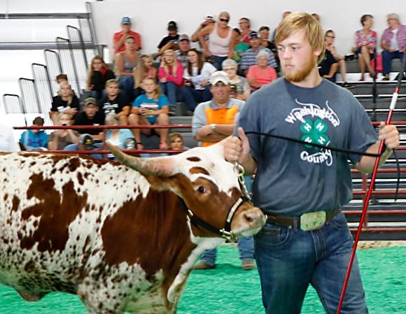 Connor Scheer, 4H beef show