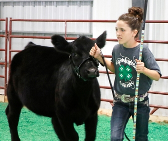 Ella Booth, WCF Beef show