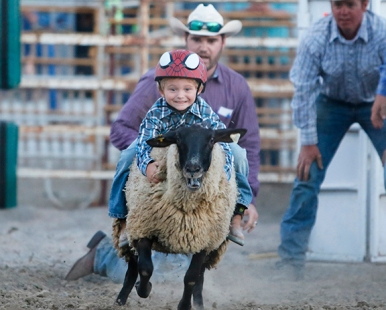 Mutton Buster Greyson Nixon Friday night Rodeo performance.