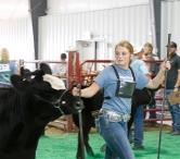 WCF Beef show