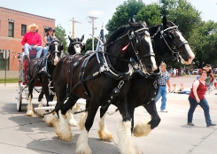 Jenson Shires Emily and Destiny in front and June and Ebony pull wagon driven by Dean Jensen and Megan Degons. Gateway to the West parade