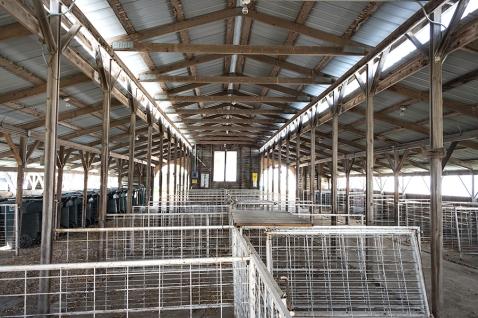 Swine barn interior reminds me of a church basilica.