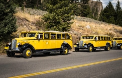 Classic Yellowstone tour busses lined up near Tower Fall in Yellowstone National Park.